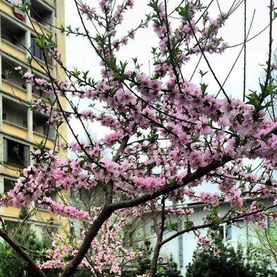 Image result for Это была весна. Чудное время в Ташкенте